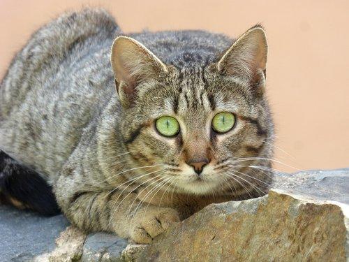 cat  feline look  stalking