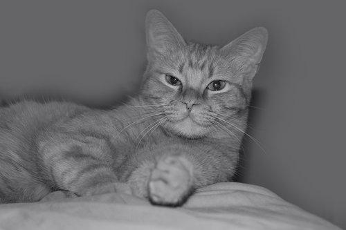 cat  nice  kitten