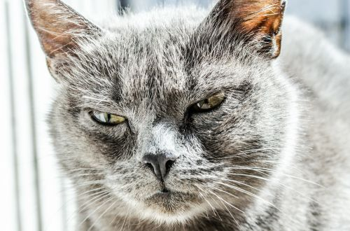 cat angry unhappy