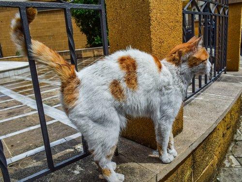cat  stray  street
