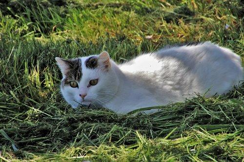 cat  spring  field