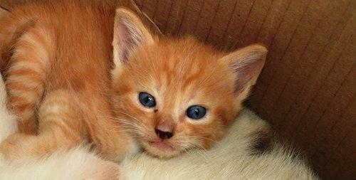 cat  animalia  small