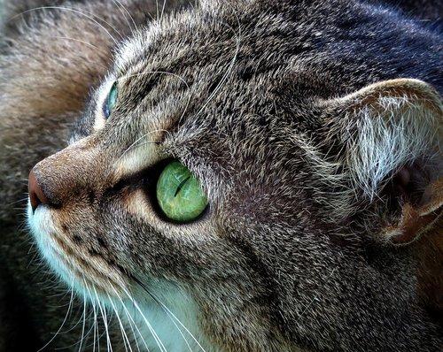 cat  kitten  gray cat