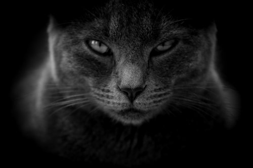 cat  moody  angry