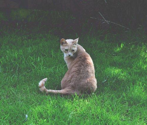 cat  wait  pet