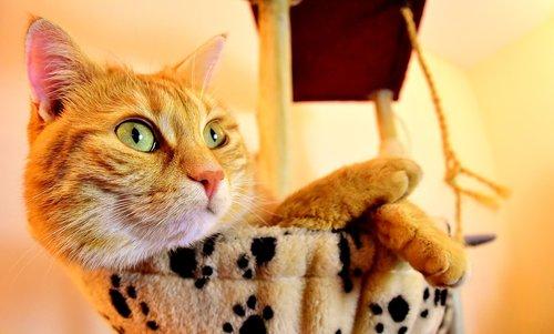 cat  red  cute