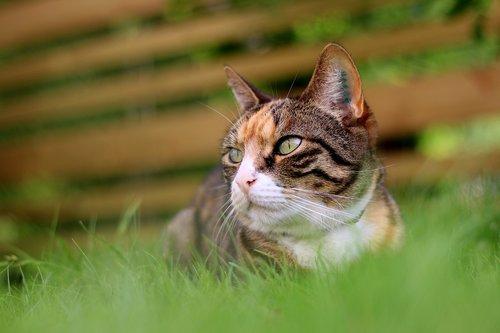 cat  rest  grass