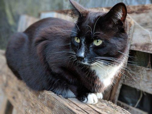 cat  pallet  animal