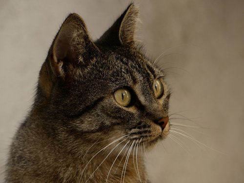 cat  homeless  dachowiec
