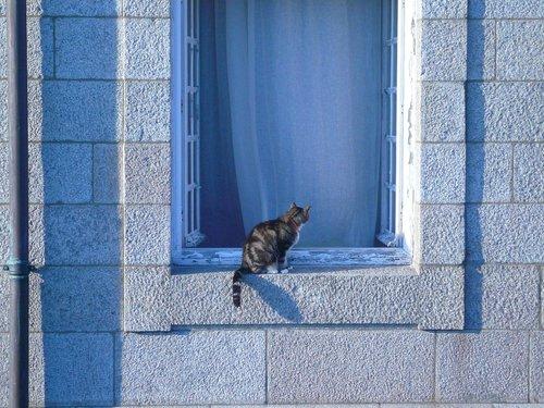 cat  window sill  pet