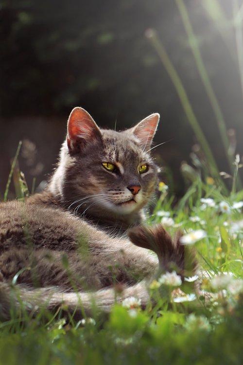 cat  garden  eyes-green