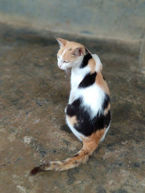 cat  pussycat  feline