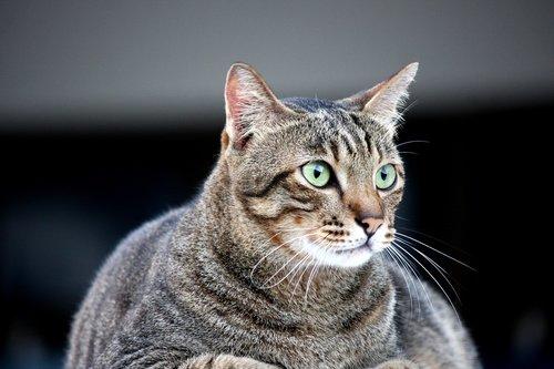 cat  fat cat  animals