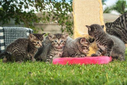 cat  pet  play