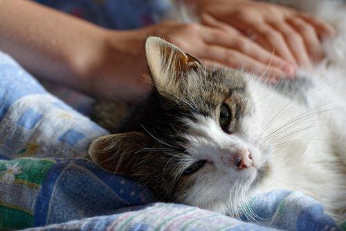 cat  kitten  downy