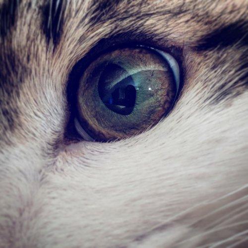 cat  cat eye  eye