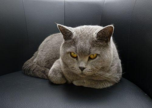 cat «top» lurking
