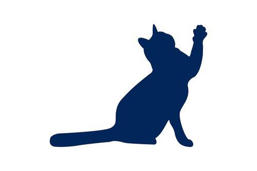 cat  animal  silhouette