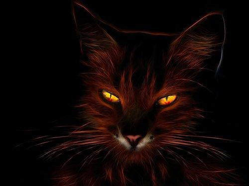 cat  profile picture  fiery