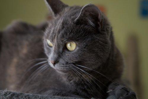 cat  grey  cats