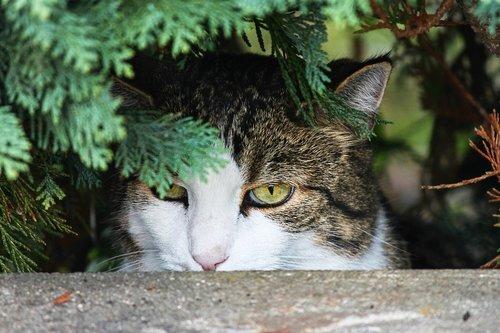 cat  hidden  watch