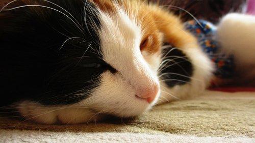 cat  kitten  furry