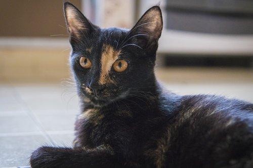 cat  animal  alert
