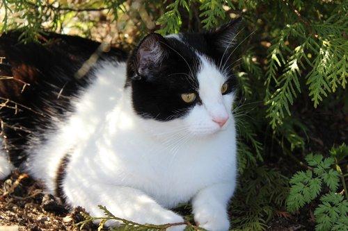 cat  summer  shade