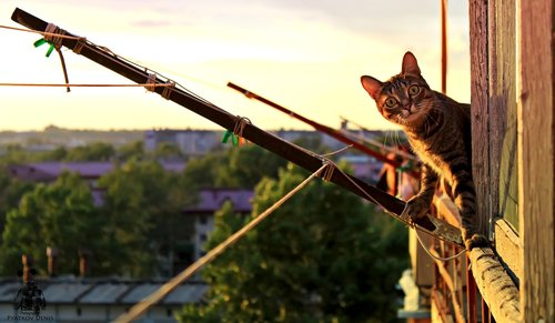 cat  paws  balcony