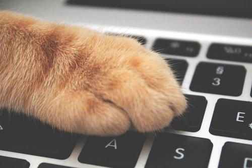 cat  paw  keyboard