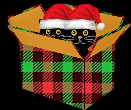 cat  christmas gift  christmas