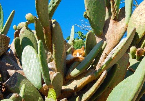 cat  cactus  animals
