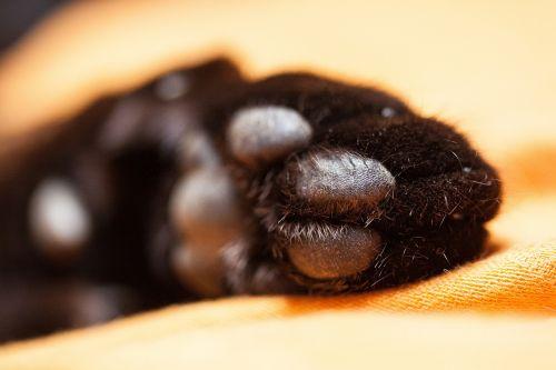 cat cat's paw paw print