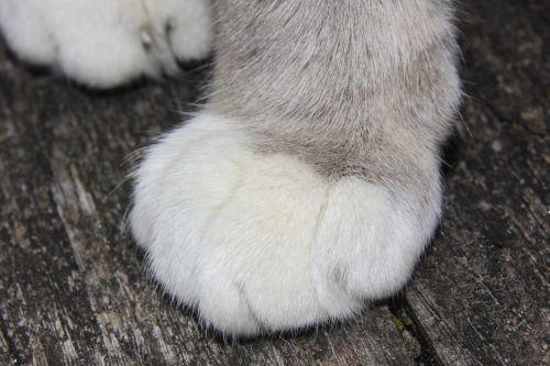 cat cat's paw occur