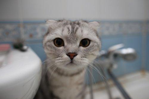 cat  muzzle  mustachioed