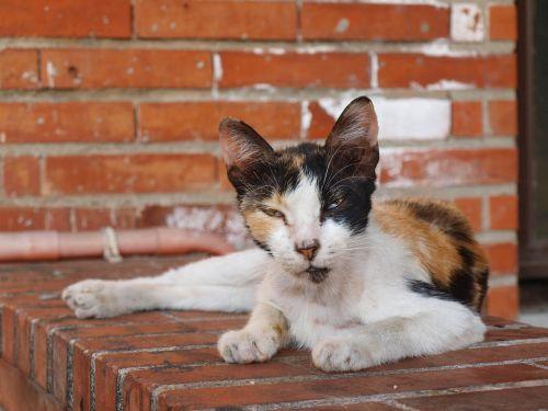 cat stray animal