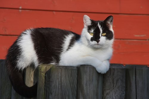 cat  fence  pet