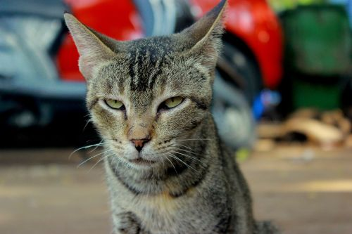 cat angry face
