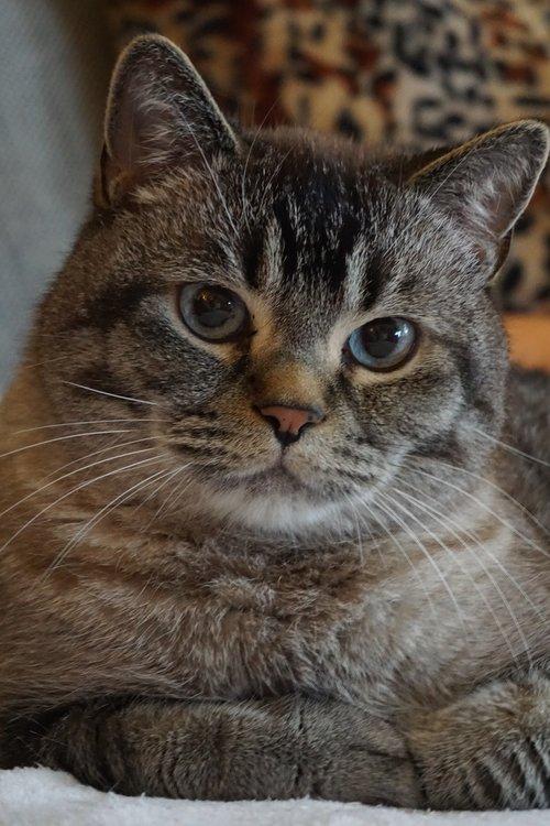 cat  cat love  cat friend
