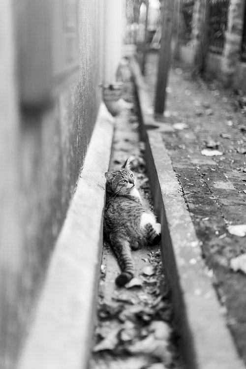 cat  black and white  outdoor