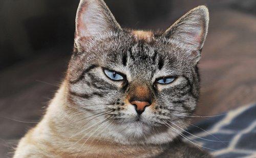 cat  coat  animal
