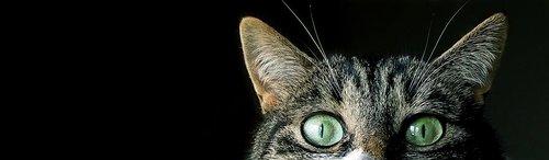 cat  eyes  sneaky