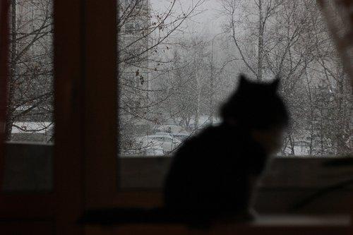 cat  snow  winter