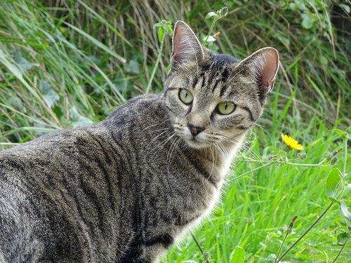 cat  feline  fur