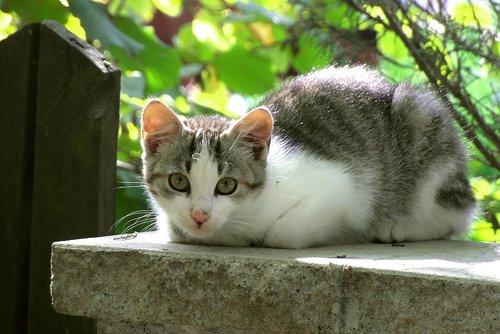 cat  mammal  animals
