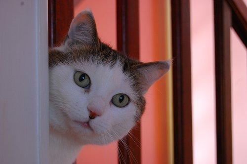 cat  good looking  hide and seek