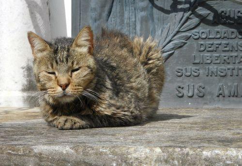 cat cemetery peace