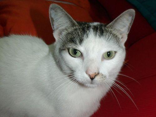 cat feline kitten