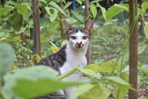 cat  shocked  animal