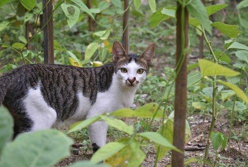 cat  animal  wildcat